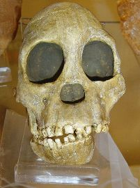 Cradle of Humankind Sterkfontein Caves Tour